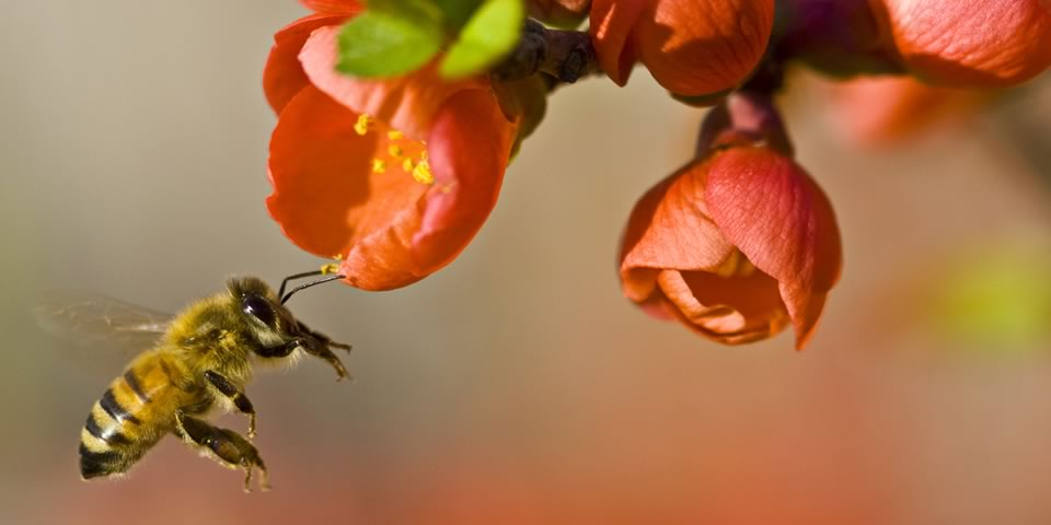 An image from What's the Buzz? Why Honey Bees Matter